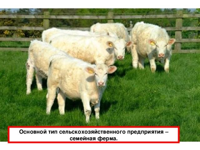 Основной тип сельскохозяйственного предприятия – семейная ферма.
