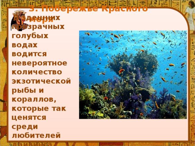 3. Побережье Красного моря    В здешних прозрачных голубых водах водится невероятное количество экзотической рыбы и кораллов, которые так ценятся среди любителей дайвинга.