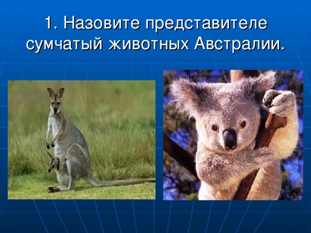 1. Назовите представителе сумчатый животных Австралии.