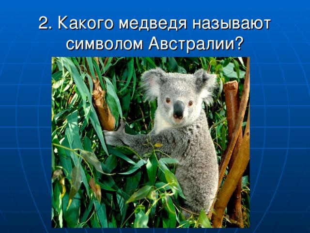 2. Какого медведя называют символом Австралии?