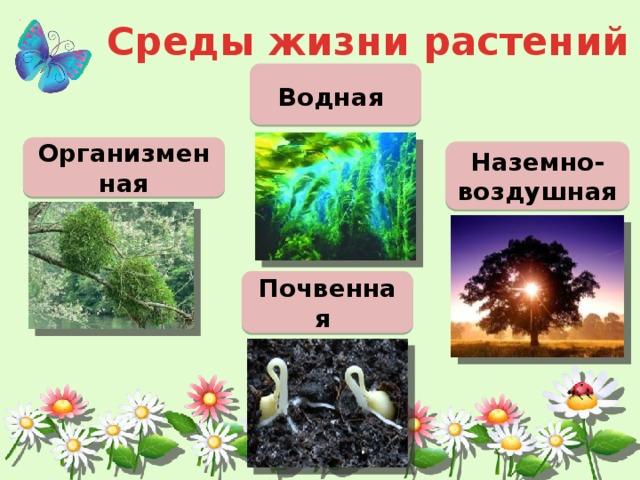 Среды жизни растений Водная  Организменная Наземно-воздушная Почвенная