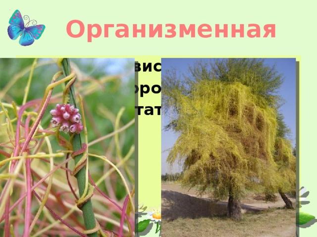 Организменная Паразит зависит от хозяина Мало кислорода Готовые питательные вещества