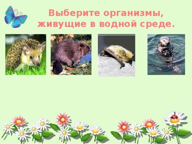 Выберите организмы, живущие в водной среде.