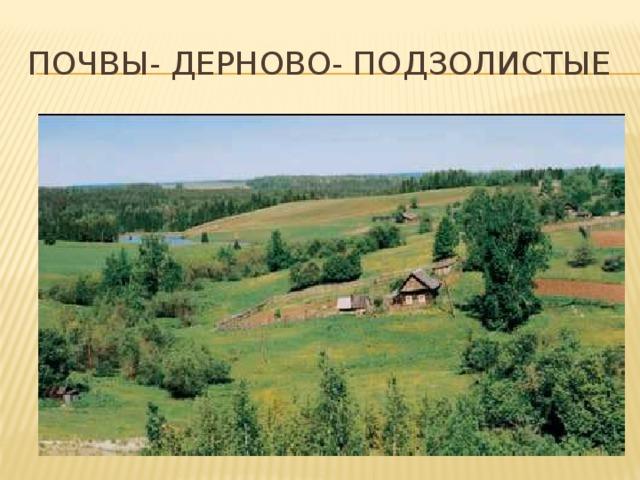 Почвы- дерново- подзолистые