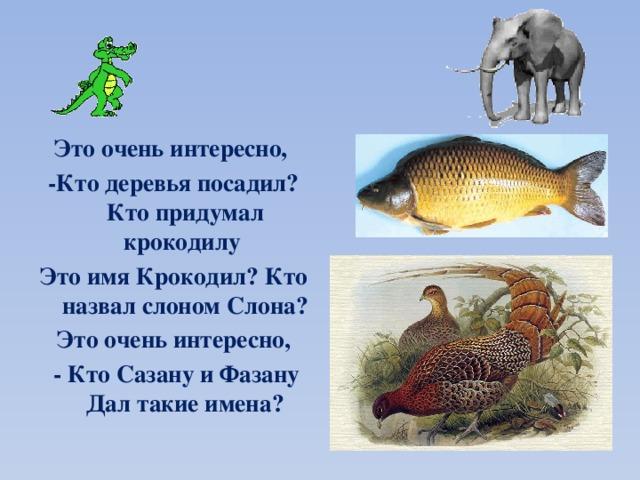 Это очень интересно, -Кто деревья посадил? Кто придумал крокодилу Это имя Крокодил? Кто назвал слоном Слона? Это очень интересно,  - Кто Сазану и Фазану Дал такие имена?