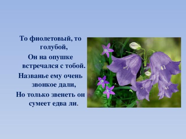 То фиолетовый, то голубой, Он на опушке встречался с тобой. Названье ему очень звонкое дали, Но только звенеть он сумеет едва ли .