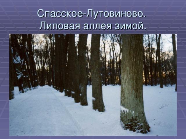 Спасское-Лутовиново.  Липовая аллея зимой.
