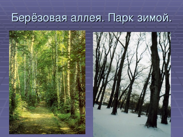 Берёзовая аллея. Парк зимой.
