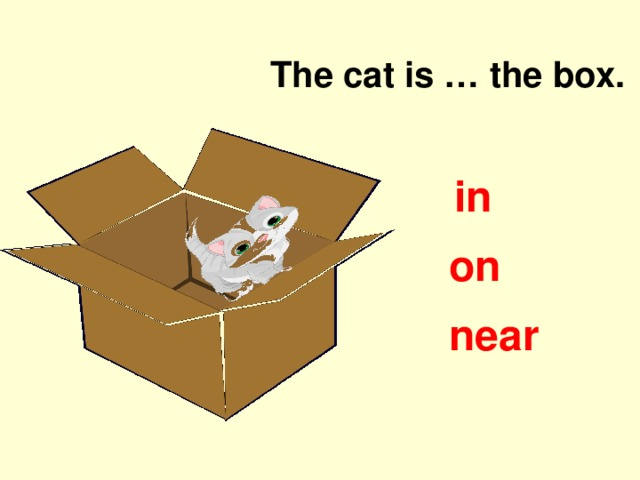 The cat is … the box. in on near
