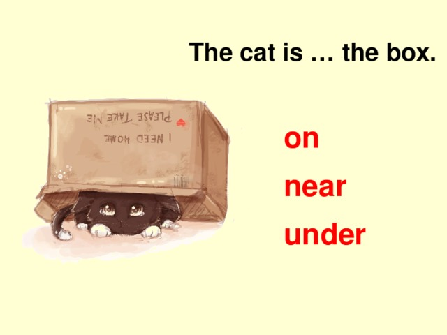 The cat is … the box. on near under