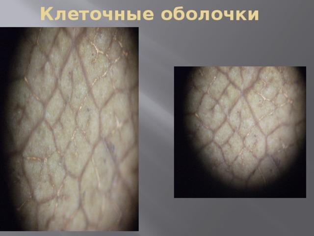 Клеточные оболочки