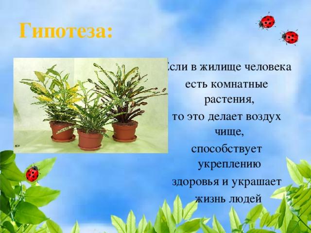 Гипотеза: Если в жилище человека есть комнатные растения, то это делает воздух чище, способствует укреплению здоровья и украшает  жизнь людей