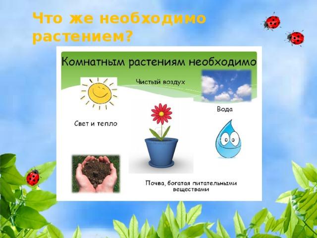 Что же необходимо растением?