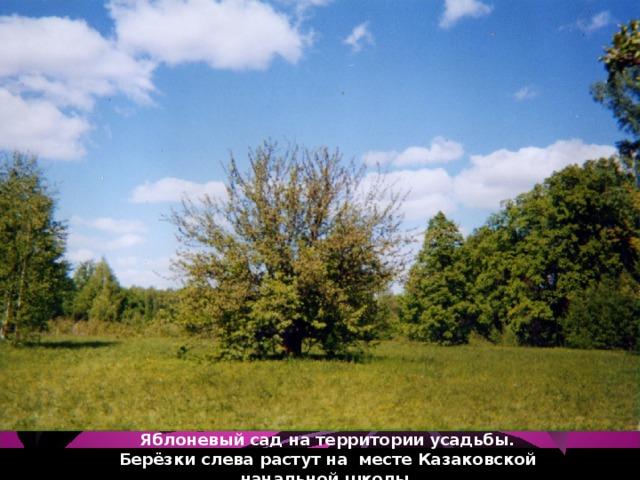 Яблоневый сад на территории усадьбы.  Берёзки слева растут на месте Казаковской начальной школы.