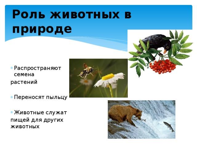 Роль животных в природе Распространяют семена растений Переносят пыльцу Животные служат пищей для других животных