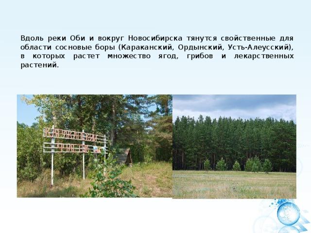 Вдоль реки Оби и вокруг Новосибирска тянутся свойственные для области сосновые боры (Караканский, Ордынский, Усть-Алеусский), в которых растет множество ягод, грибов и лекарственных растений.