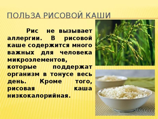 Польза рисовой каши  Рис не вызывает аллергии. В рисовой каше содержится много важных для человека микроэлементов, которые поддержат организм в тонусе весь день. Кроме того, рисовая каша низкокалорийная.