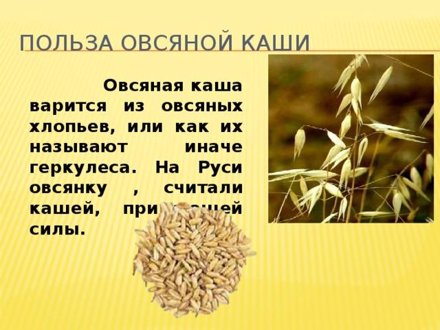 Польза овсяной каши  Овсяная каша варится из овсяных хлопьев, или как их называют иначе геркулеса. На Руси овсянку , считали кашей, придающей силы.