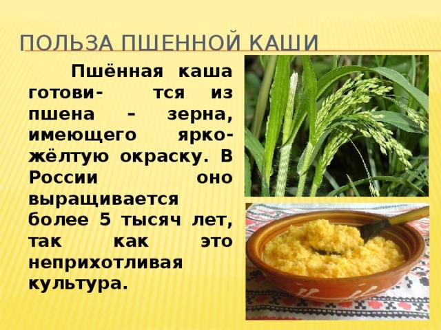 Польза пшенной каши  Пшённая каша готови- тся из пшена – зерна, имеющего ярко-жёлтую окраску. В России оно выращивается более 5 тысяч лет, так как это неприхотливая культура.