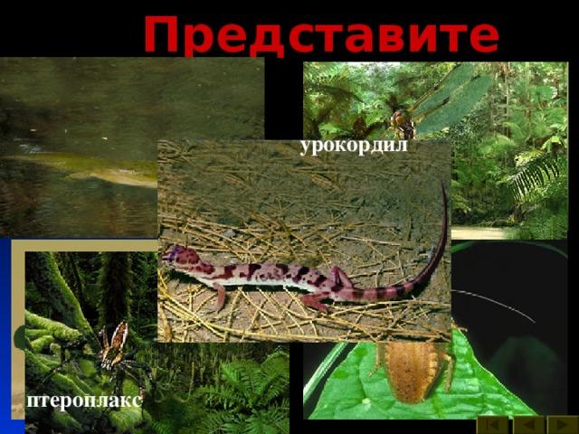 Представители : урокордил бабочки вестлотиана стрекоза пауки таракан кузнечик многоножка птероплакс