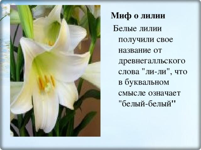 Миф о лилии  Белые лилии получили свое название от древнегалльского слова
