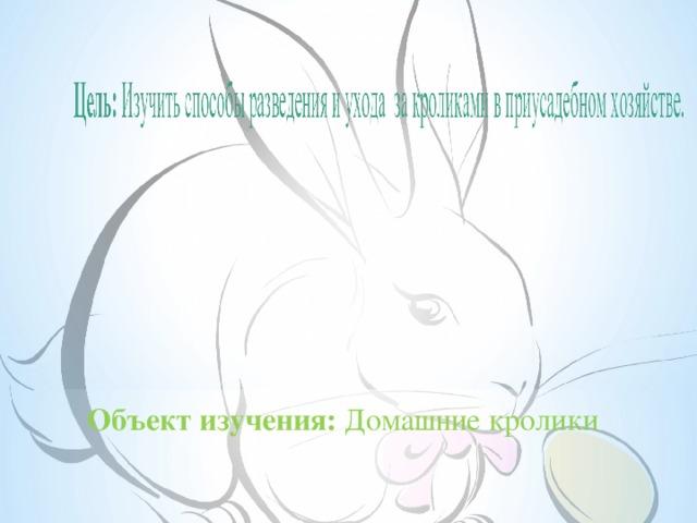 Объект изучения: Домашние кролики