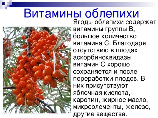 Лекарственное растение облепиха доклад 6227