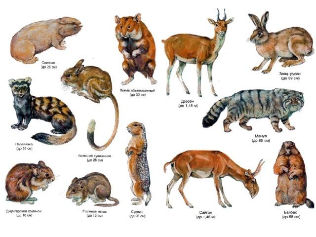 картинки животных и растений природных зон птица интересна