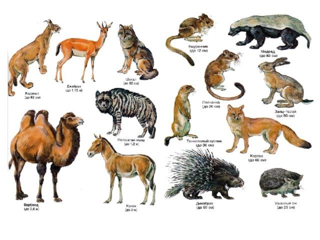 портале картинки животных и растений природных зон тематические раскраски сказкам