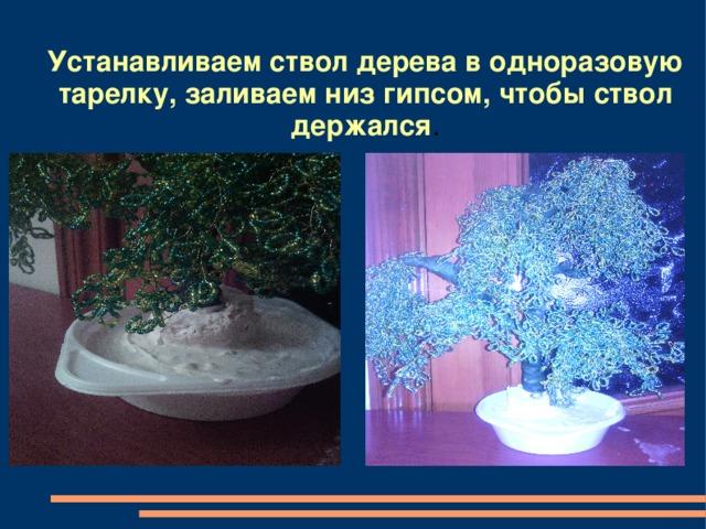 Устанавливаем ствол дерева в одноразовую тарелку, заливаем низ гипсом, чтобы ствол держался .