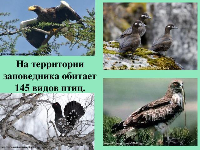 На территории заповедника обитает 145 видов птиц.