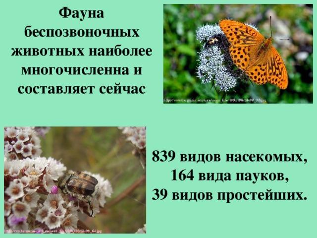 Фауна беспозвоночных животных наиболее многочисленна и составляет сейчас 839 видов насекомых, 164 вида пауков, 39 видов простейших.