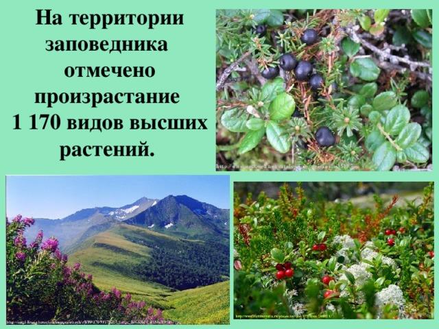 На территории заповедника отмечено произрастание 1 170 видов высших растений.