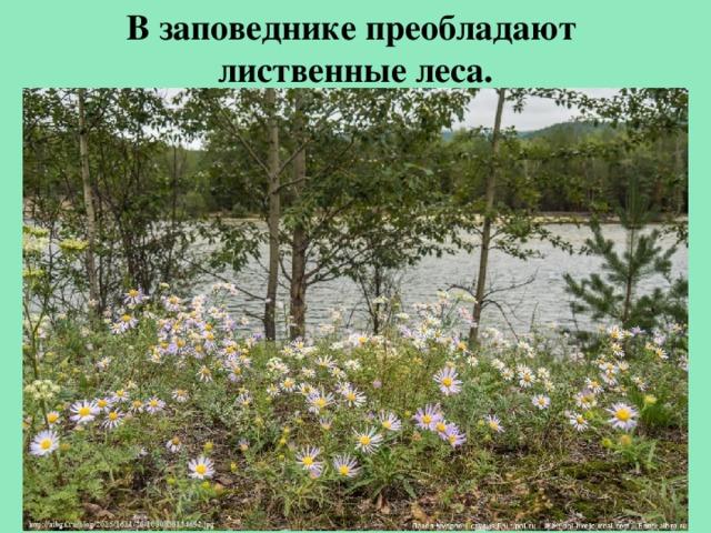 Взаповеднике преобладают лиственные леса.