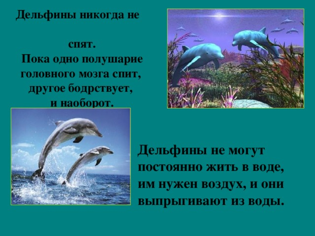 Дельфины никогда не  спят.  Пока одно полушарие  головного мозга спит,  другое бодрствует,  и наоборот.  Дельфины не могут постоянно жить в воде, им нужен воздух, и они выпрыгивают из воды.