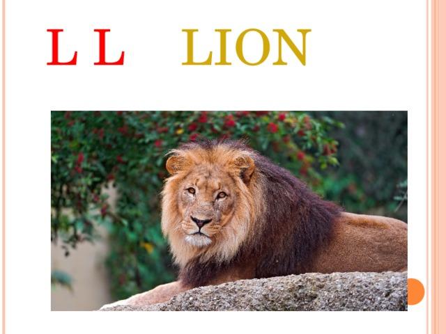 L L LION