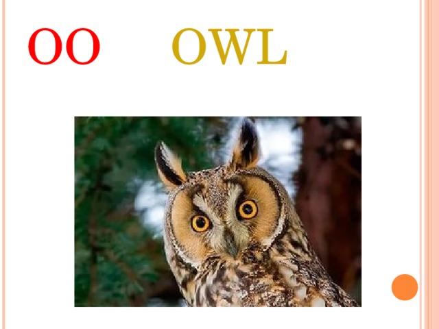 OO  OWL
