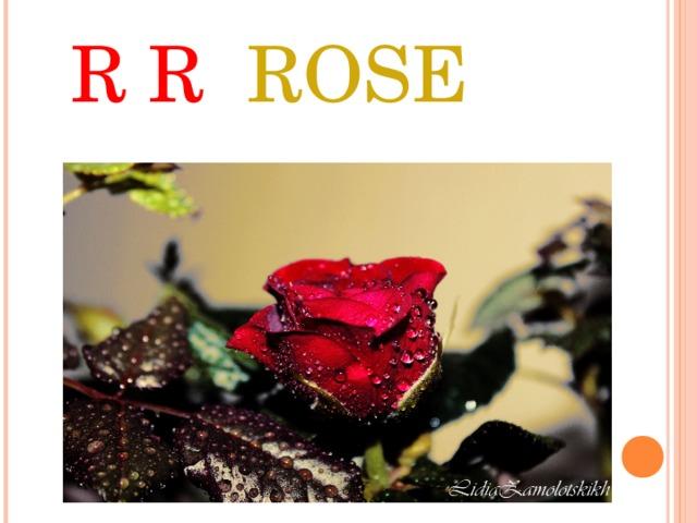 R R ROSE