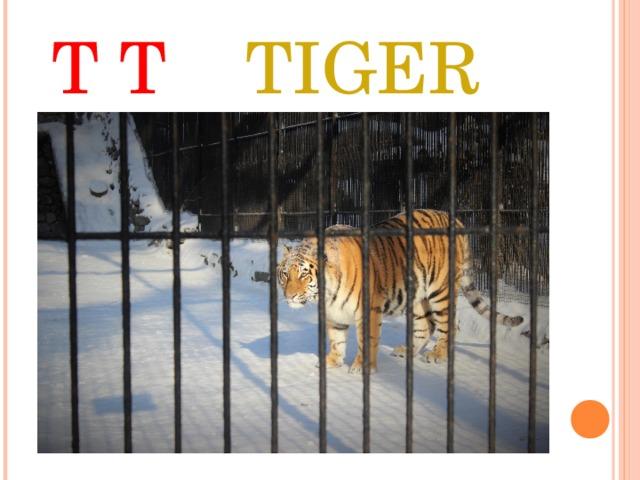 T T TIGER