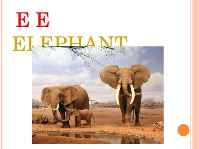 E E ELEPHANT