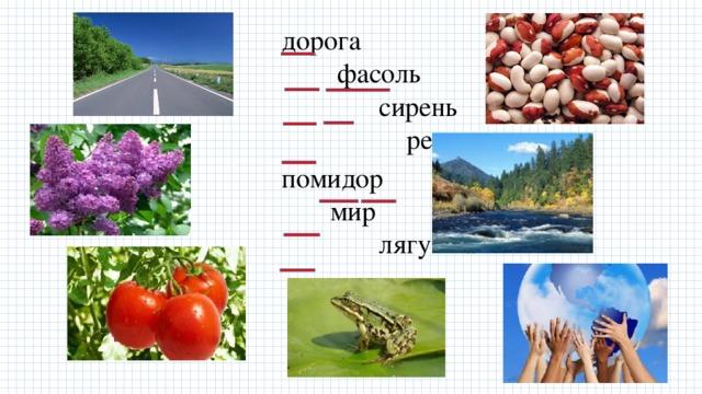 дорога фасоль сирень река помидор мир лягушка