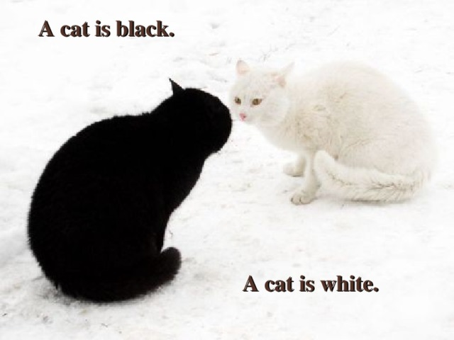 A cat is black. A cat is black. A CAT IS WHITE A cat is white.