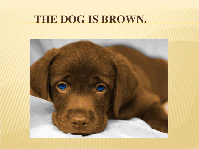 THE DOG IS BROWN.