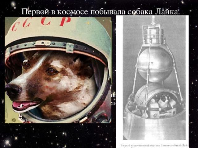 Первой в космосе побывала собака Лайка. 3 ноября 1957 года Для неё построили специальную ракету, где был запас пищи, воды и воздуха. На Лайку надели специальный скафандр, и ракета умчала её в космос