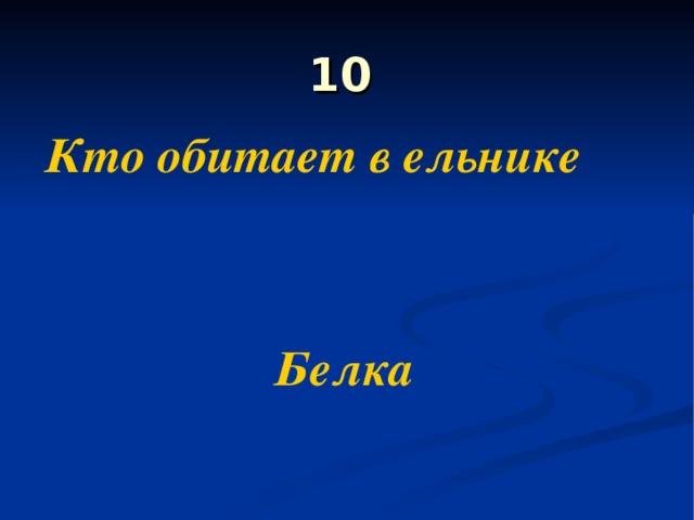 10 Кто обитает в ельнике   Белка