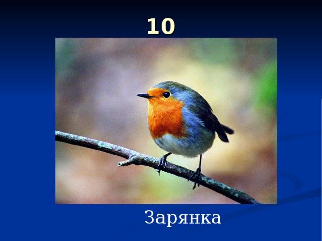 10 Зарянка