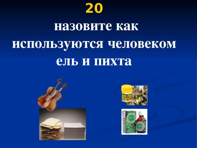 20   назовите как используются человеком ель и пихта
