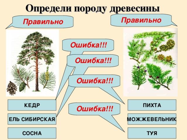 Определи породу древесины Правильно Правильно Ошибка!!! Ошибка!!! Ошибка!!! КЕДР ПИХТА Ошибка!!! ЕЛЬ СИБИРСКАЯ МОЖЖЕВЕЛЬНИК СОСНА ТУЯ