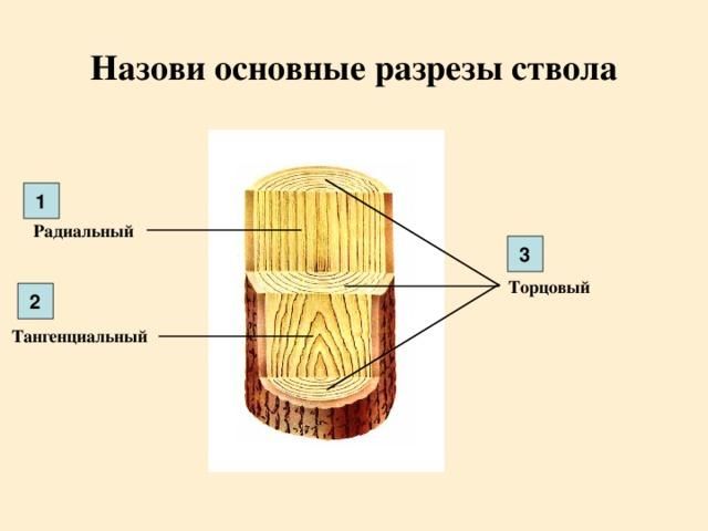 Назови основные разрезы ствола 1 Радиальный 3 Торцовый 2 Тангенциальный