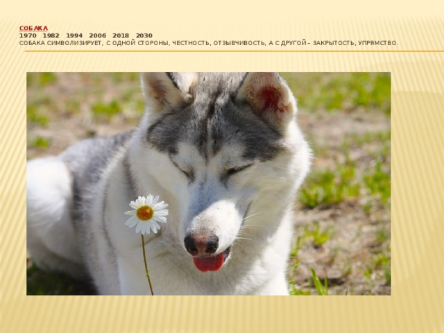 Собака  1970  1982  1994  2006  2018  2030  Собака символизирует, с одной стороны, честность, отзывчивость, а с другой – закрытость, упрямство.